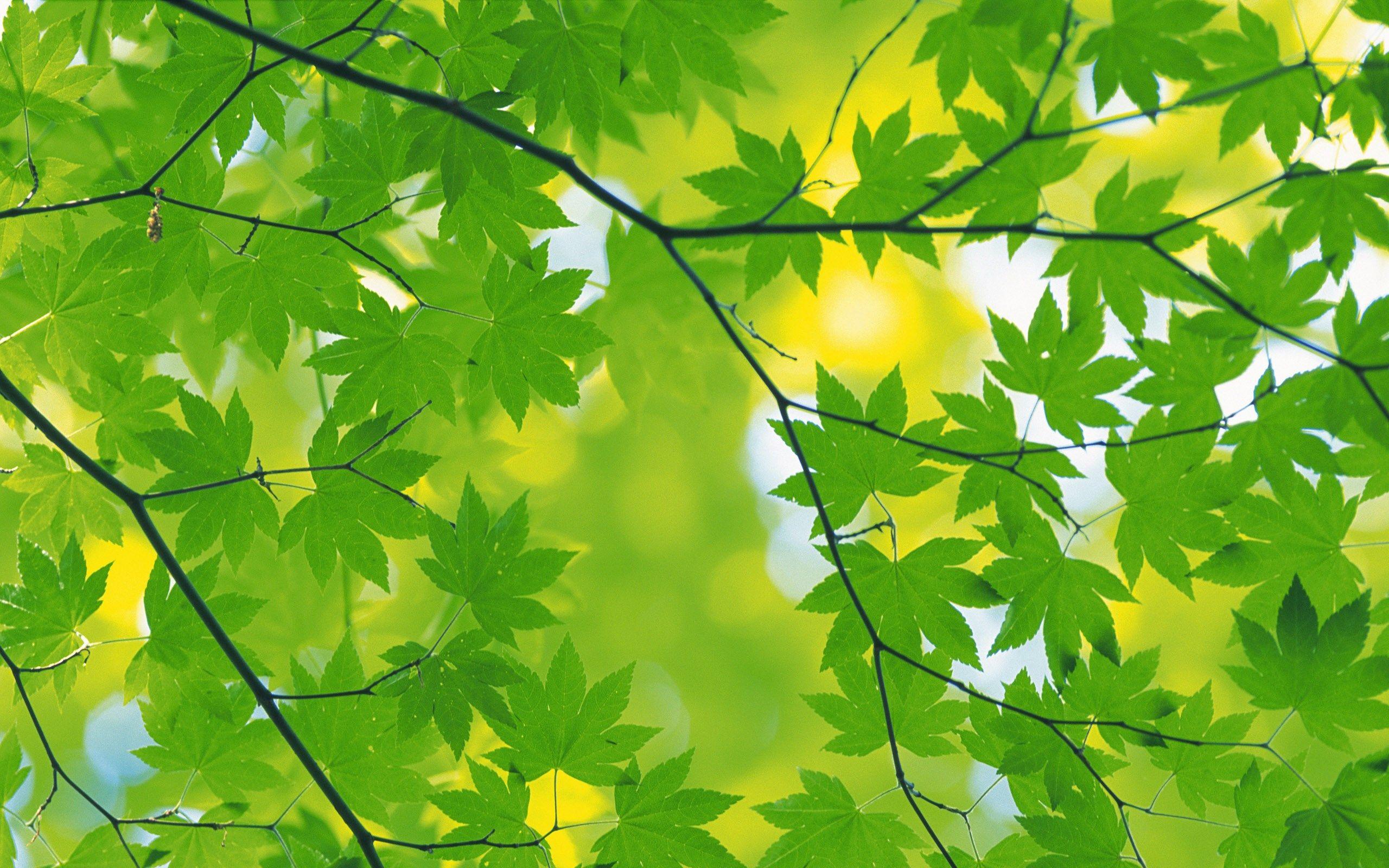 best green autumn leaves background wallpaper   ololoshenka ...