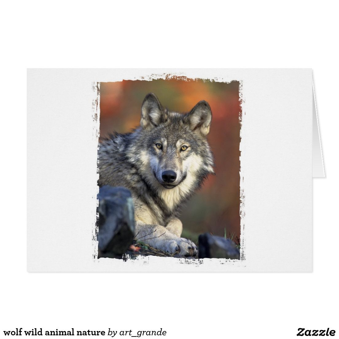 Wolf Wild Animal Nature Card