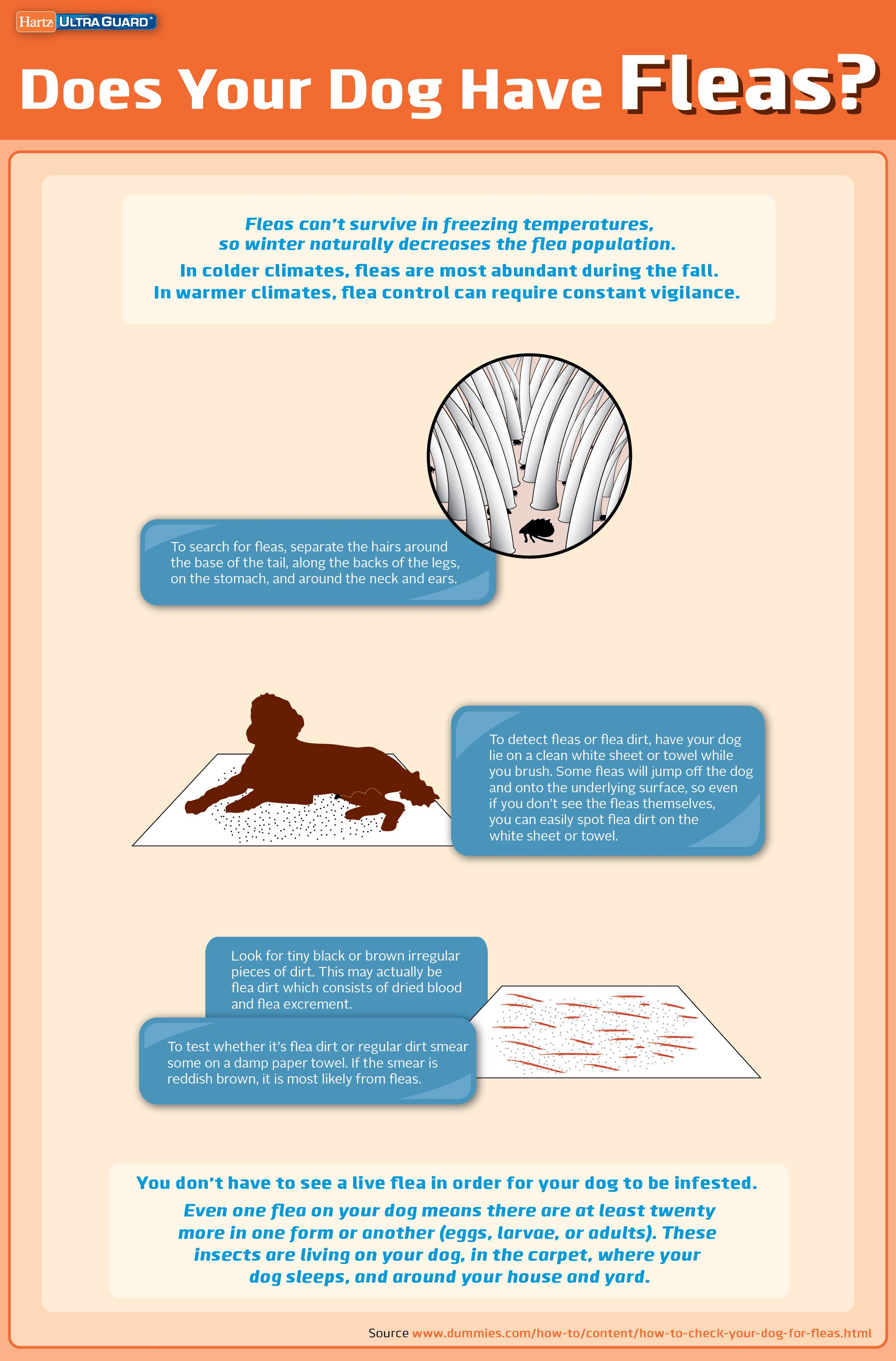 Do you know how to check your dog for fleas? Stay up to date on ...