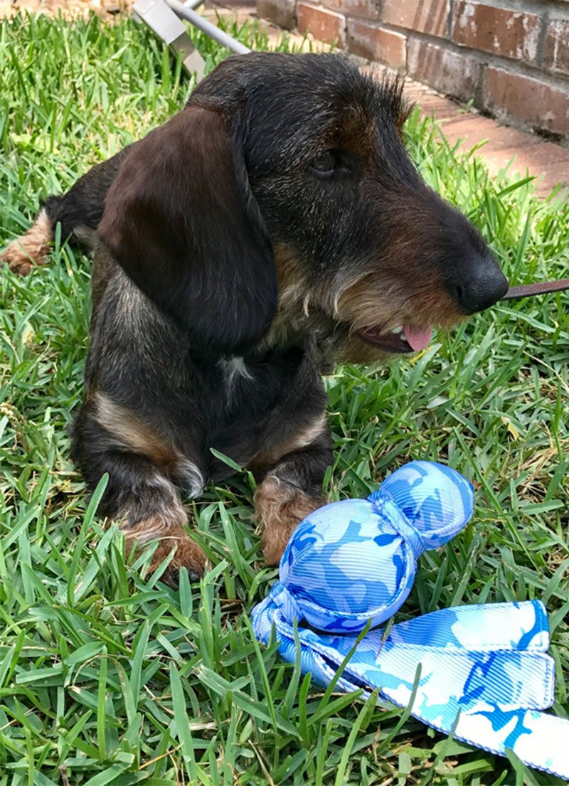 Kong Wubba Review Is This The Best Kong Toy For Your Dog Dog