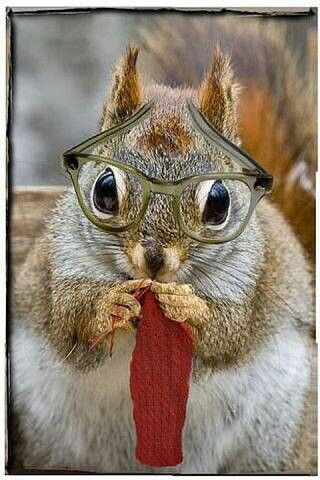 A squirrel wearing glasses. ;)   Animals Big and Small ...