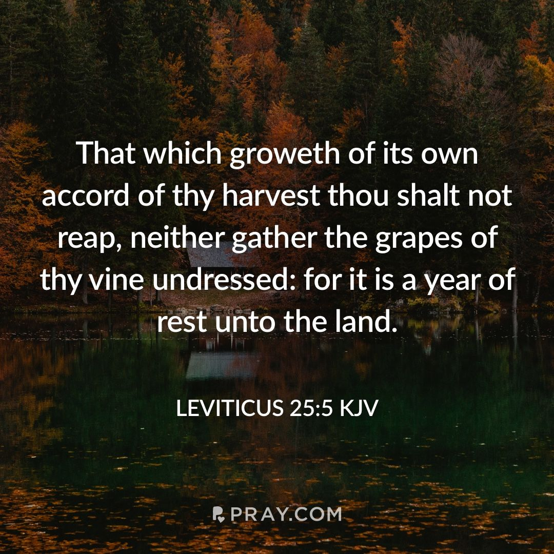 Leviticus 255 ️ 🔊🙉 Hear daily verses with a prayer on