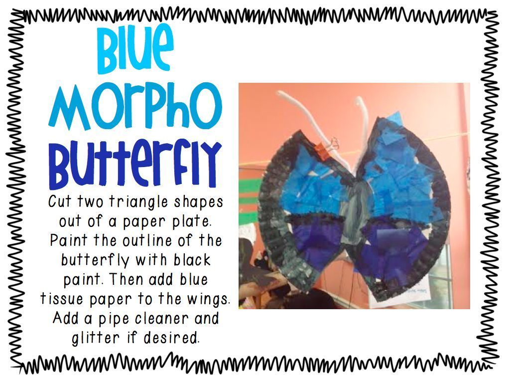 Rainforest Unit Plan Rainforest Activities Morpho Butterfly