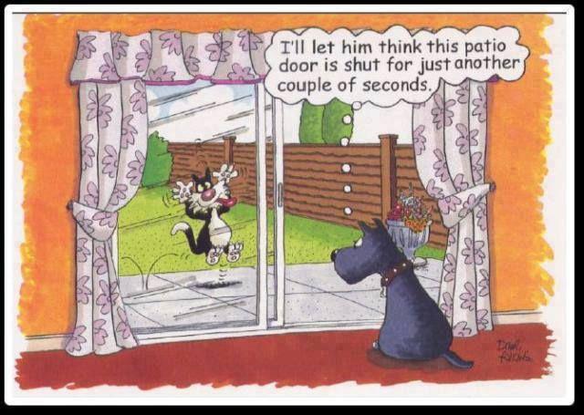Inspiring Fun And Provocative Funny Cartoons Jokes Cartoon Jokes Funny Memes