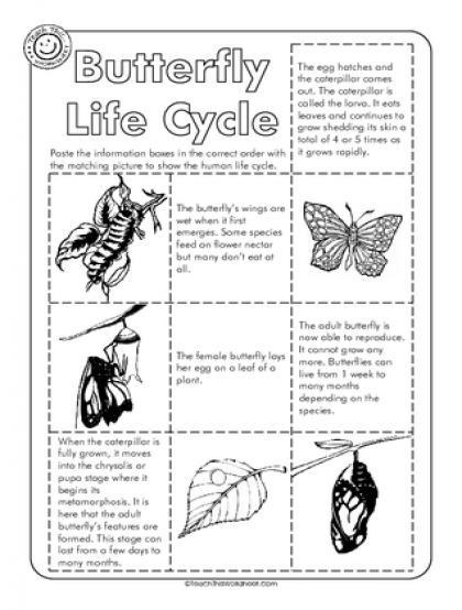 free grade 2 life cycle of a butterfly printable worksheets ...