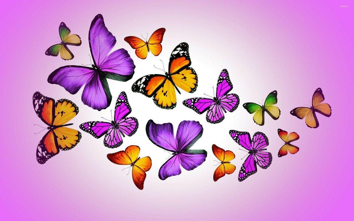 خلفيات عالية الوضوح ل فراشات Butterflies فراشة حيوانات 21 Fondos