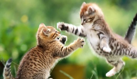 Collection Of Cute Baby Animal Wallpapers Cute Baby Animal Pictures Kittens Cutest Funny Cat Wallpaper Kitten Pictures