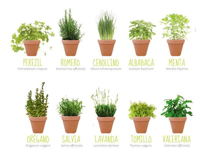 Regalos plantas aromaticas buenas ideas para la casa for Jardinera plantas aromaticas