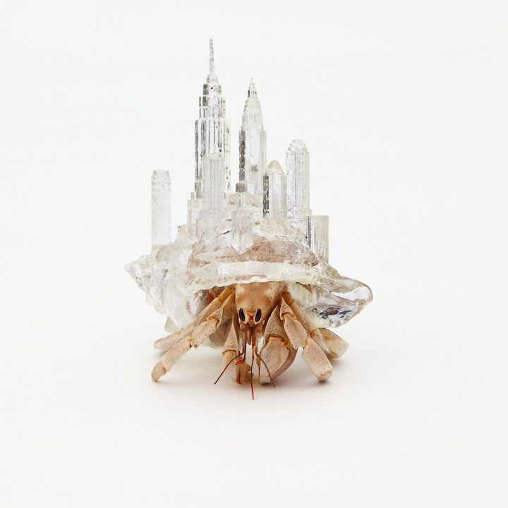 3D-printed shelters for hermit crabs, Aki Inomata  via iGNANT