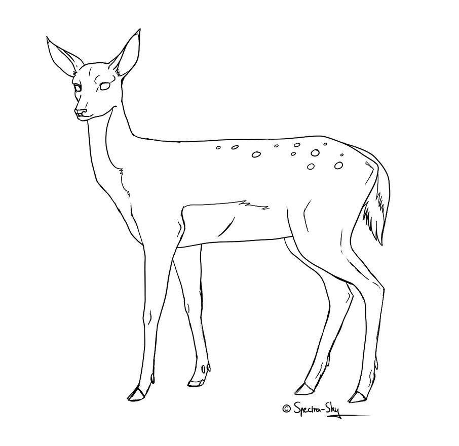How to draw a coyote step 2 apps directories - Drawings