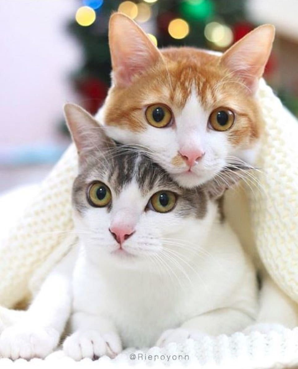 Two Bonded Siblings Find One Dedicated Cat Dad; Together