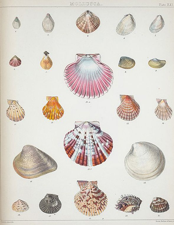 Handy image with seashell printable