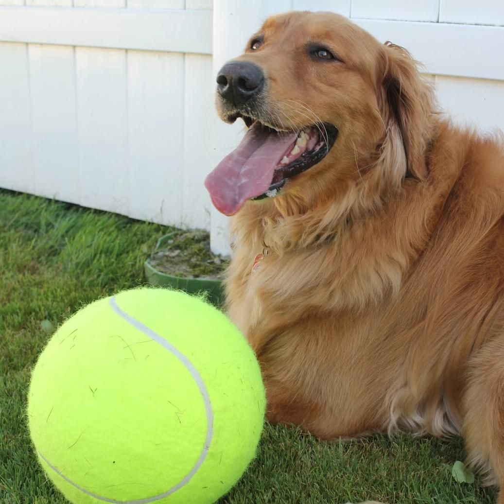 Giant Tennis Ball For Dogs Dogs Tennis Balls For Dogs Giant Dogs