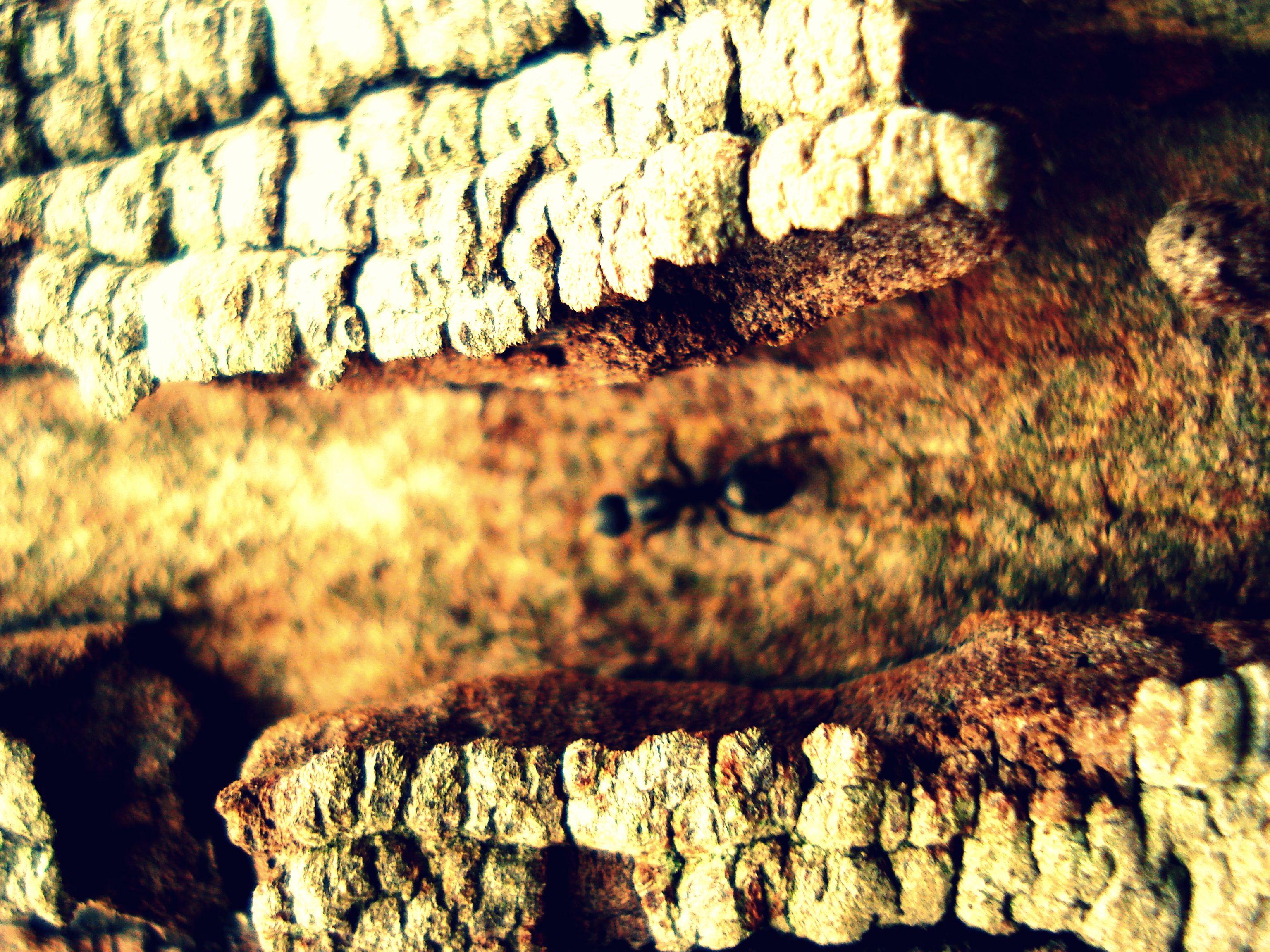Siento que soy una simple hormiga  aprendiendo a caminar al revés  sólo soy una simple hormiga  esquivando su planta del pie.  Por más que corra y me apure  nunca es suficiente para llegar  es que el tiempo parece esquivar  toda rapidez toda velocidad.  No me molesta el trabajo,  ya pararé cuando viejo  por esa condición no me quejo  pero estoy condenado a estar abajo.  Y siento que soy una simple hormiga...  me maravillo..  y es que yo soy una simple hormiga......