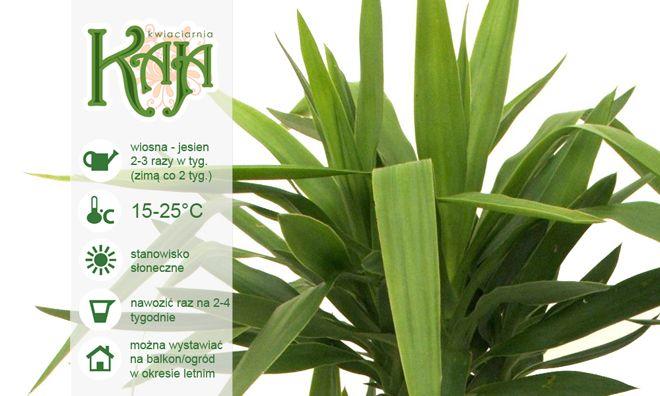 Kaja Flower Care Rosliny Doniczkowe Celery Vegetables