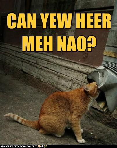 Lolcats N Funny Pictures Of Cats I Can Has Cheezburger Funny Cats Funny Cat Pictures Bad Cats