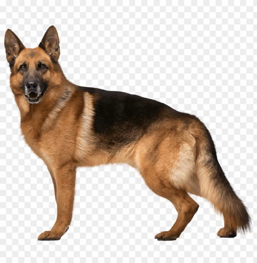 Download German Shepherd Dog Clipart Png Photo Png Free Png Images German Shepherd Dogs Shepherd Dog Dogs