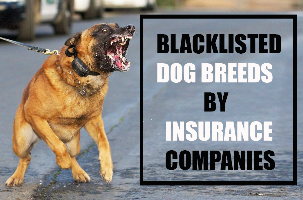 Homeowners Insurance Dog Breed Restrictions Blacklisted Dog