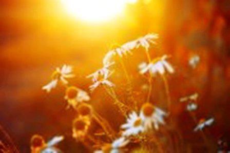 Hay más cosas en el cielo y en la Tierra ...: EL SOL.