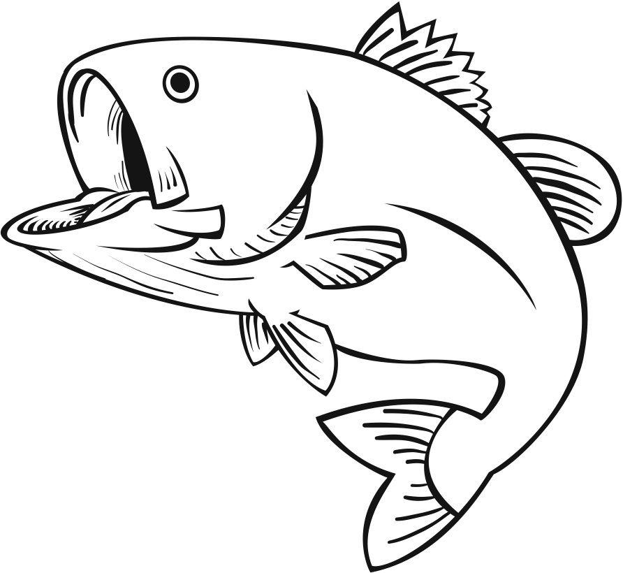 Bass Fish Georgia Largemouth Bass Fish Coloring Pages Fish