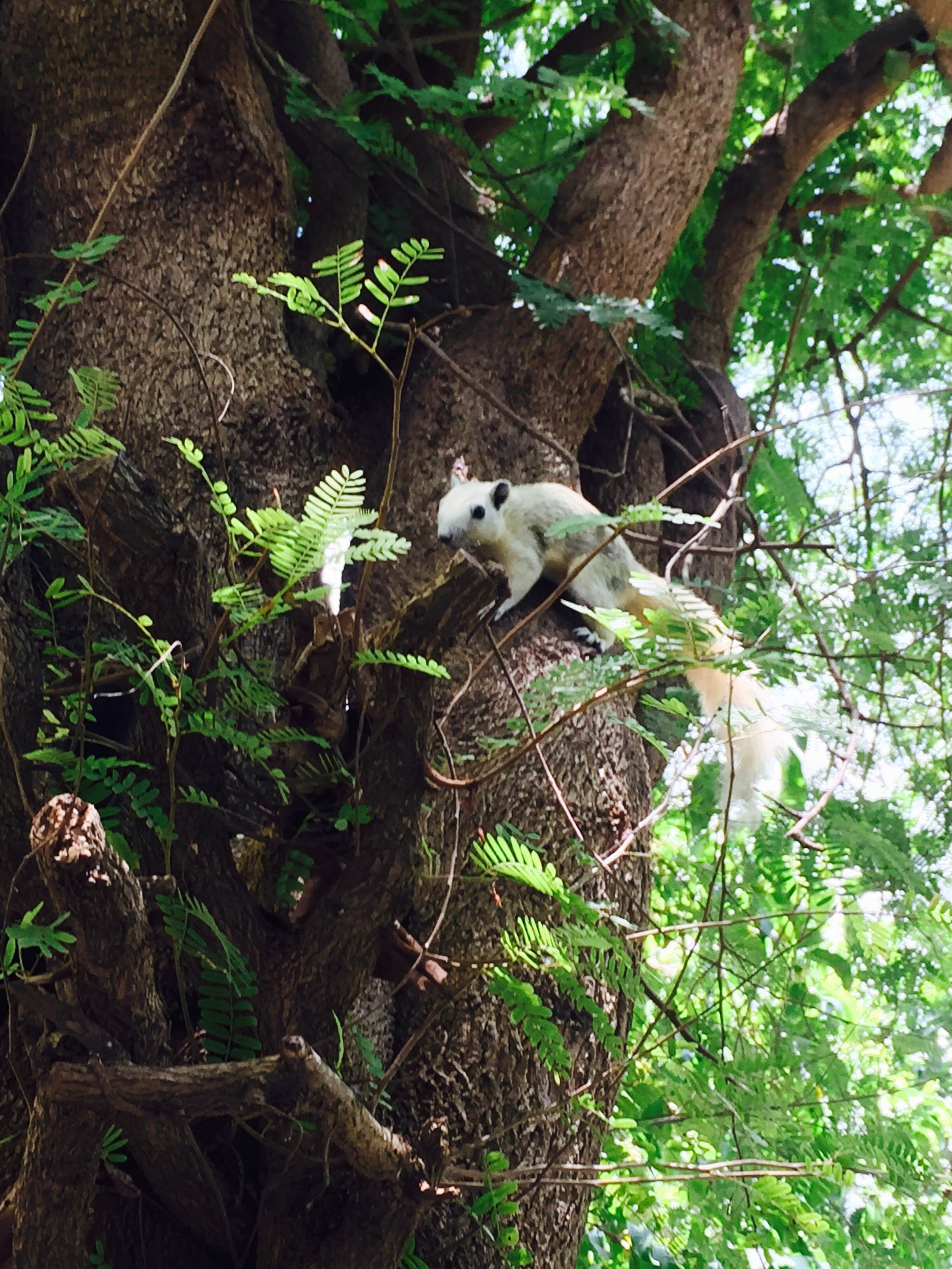 Another sunny day in Pattaya and we\'ve got a visitor in our garden ...