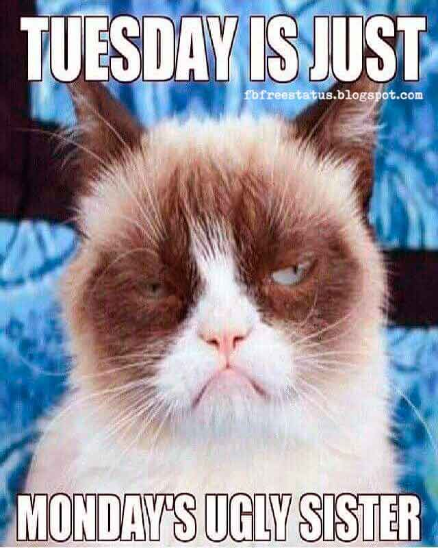 Ugly Birthday Cat: Happy & Funny Tuesday Quotes With Images, Pictures