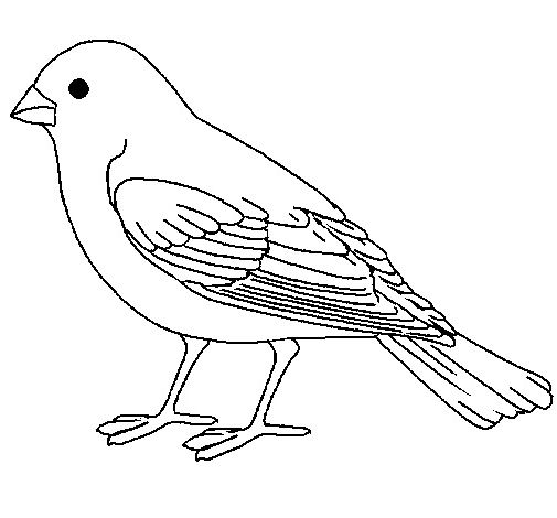 Bird Coloring Banner Google Kereses Bird Coloring Pages Animal Coloring Pages Canary Birds