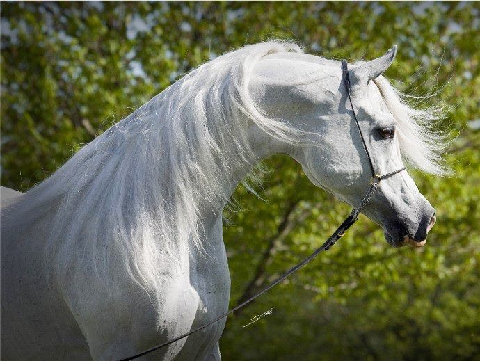 اصل جديد في الأصول Foals Horses Equines