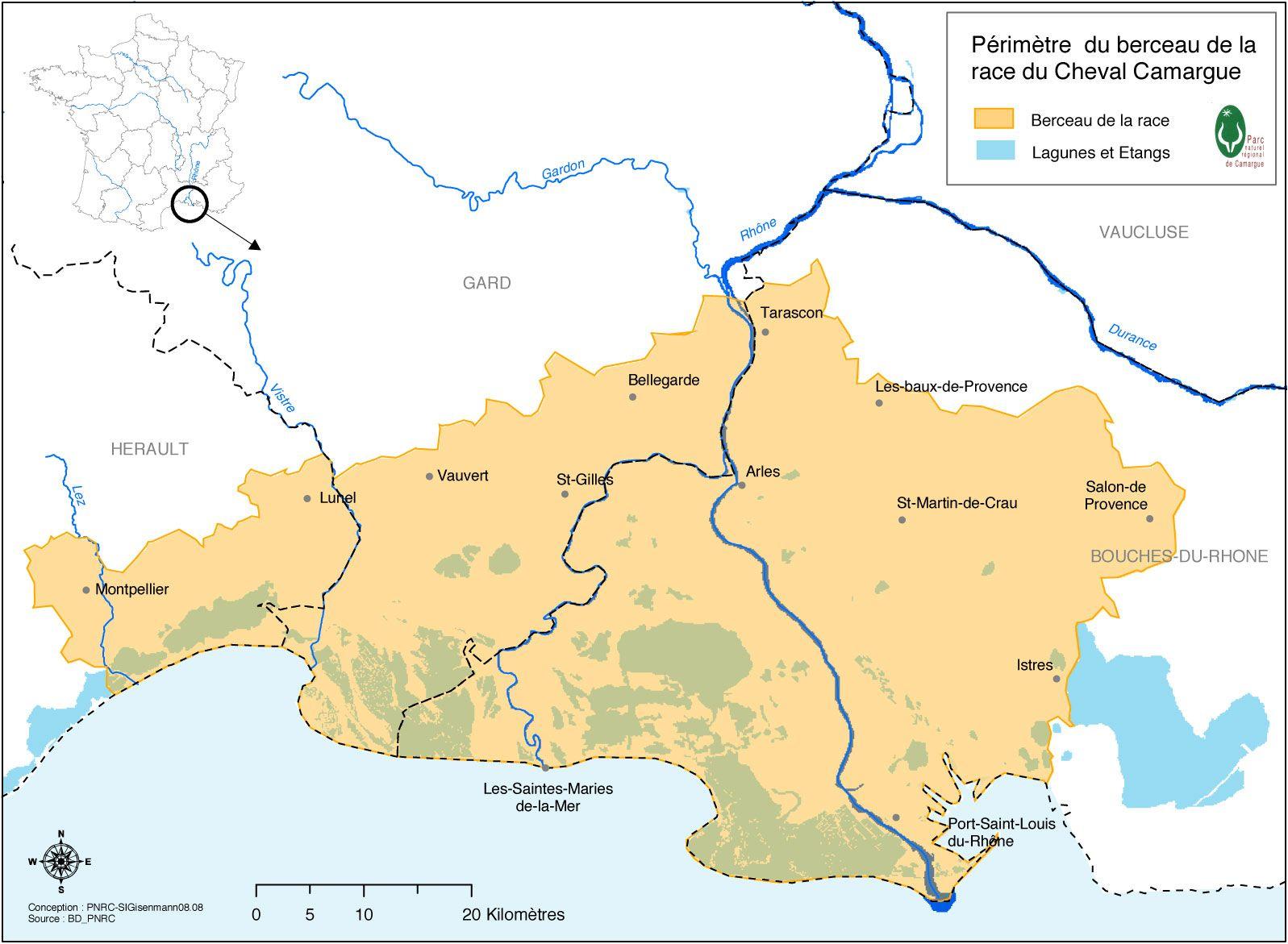 Le Berceau De Le Race Du Cheval De Camargue Camargue Horse