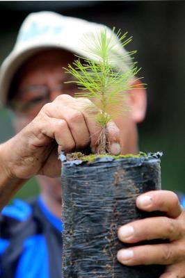 La FAO urge a América Latina a reducir deforestación para mejorar el agua