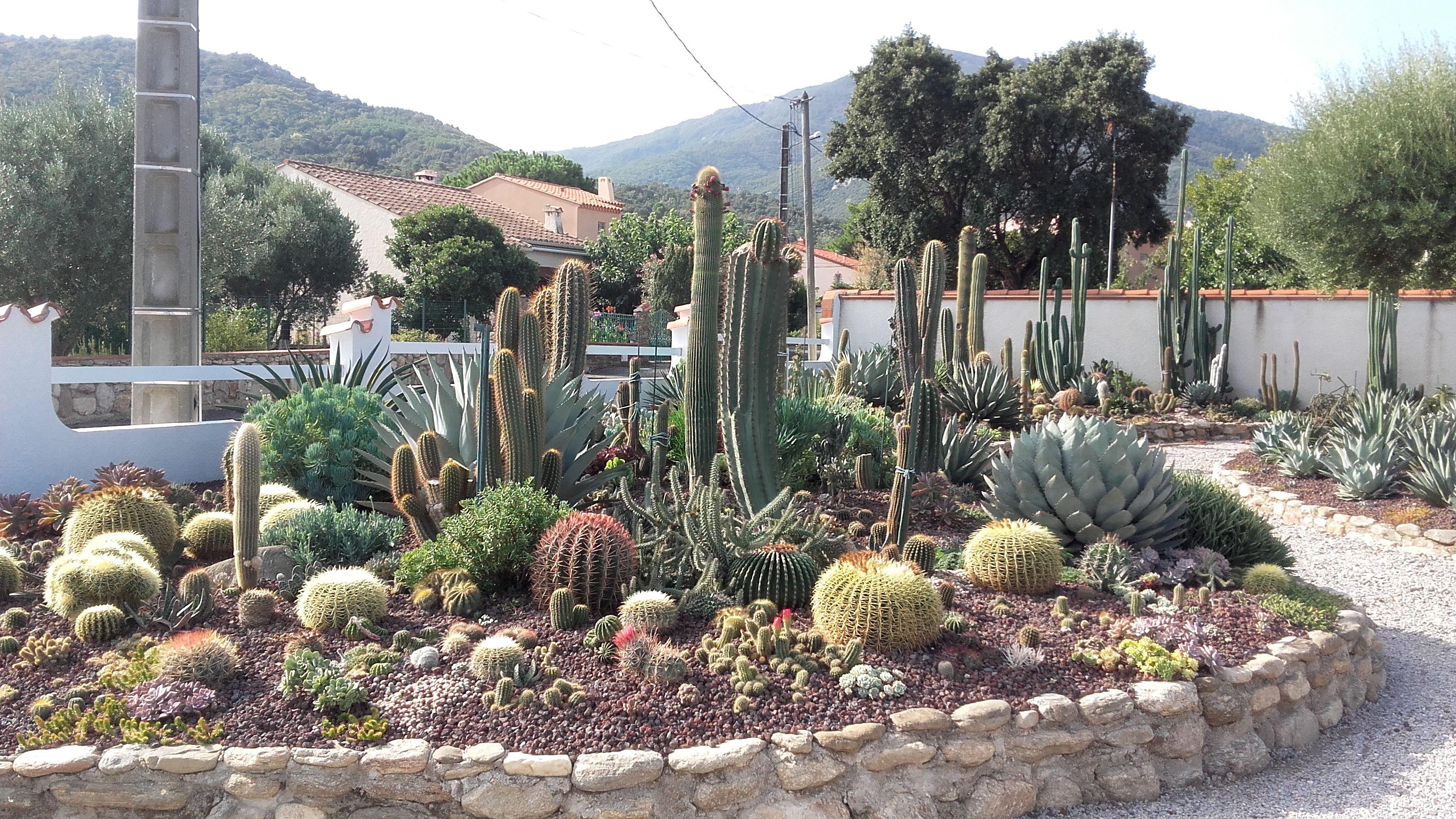 Cactus Et Plantes Grasses Pres D Argeles Sur Mer Dans Les Pyrenees