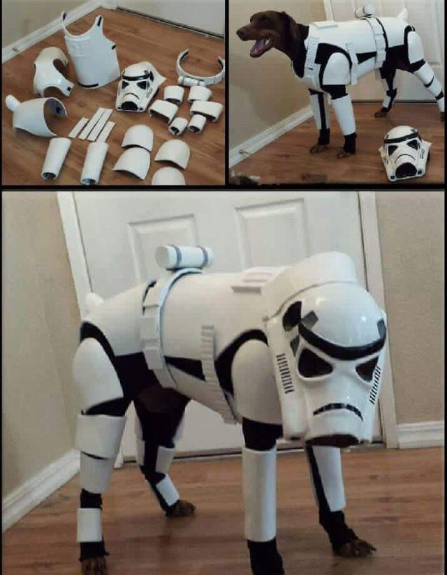 Star Wars Dog Storm Trooper Costume Funny Animal Pictures