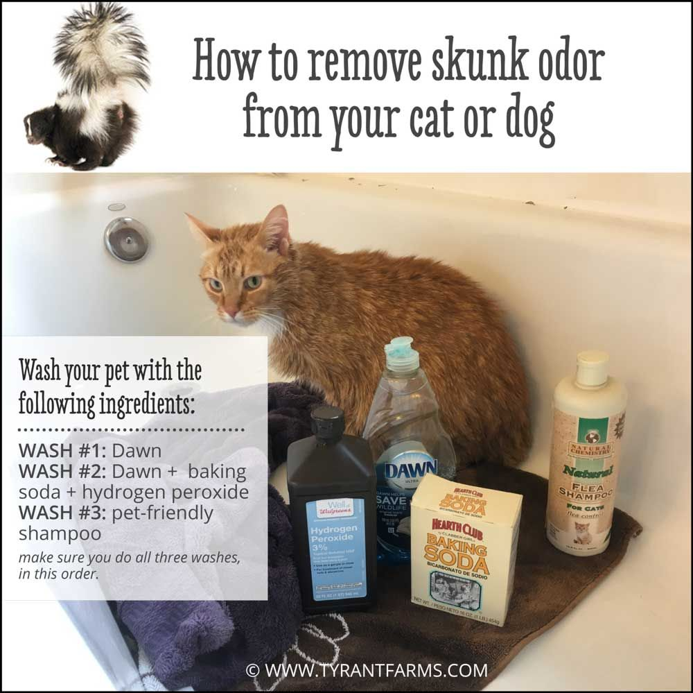 Did your pet get sprayed by a skunk dont panic read