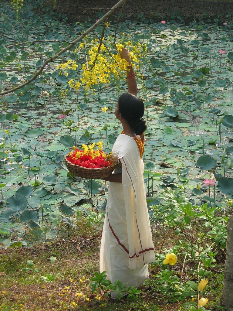 La cueillette de fleurs sur les rives des backwaters à Alleppey , Kerala,  Inde