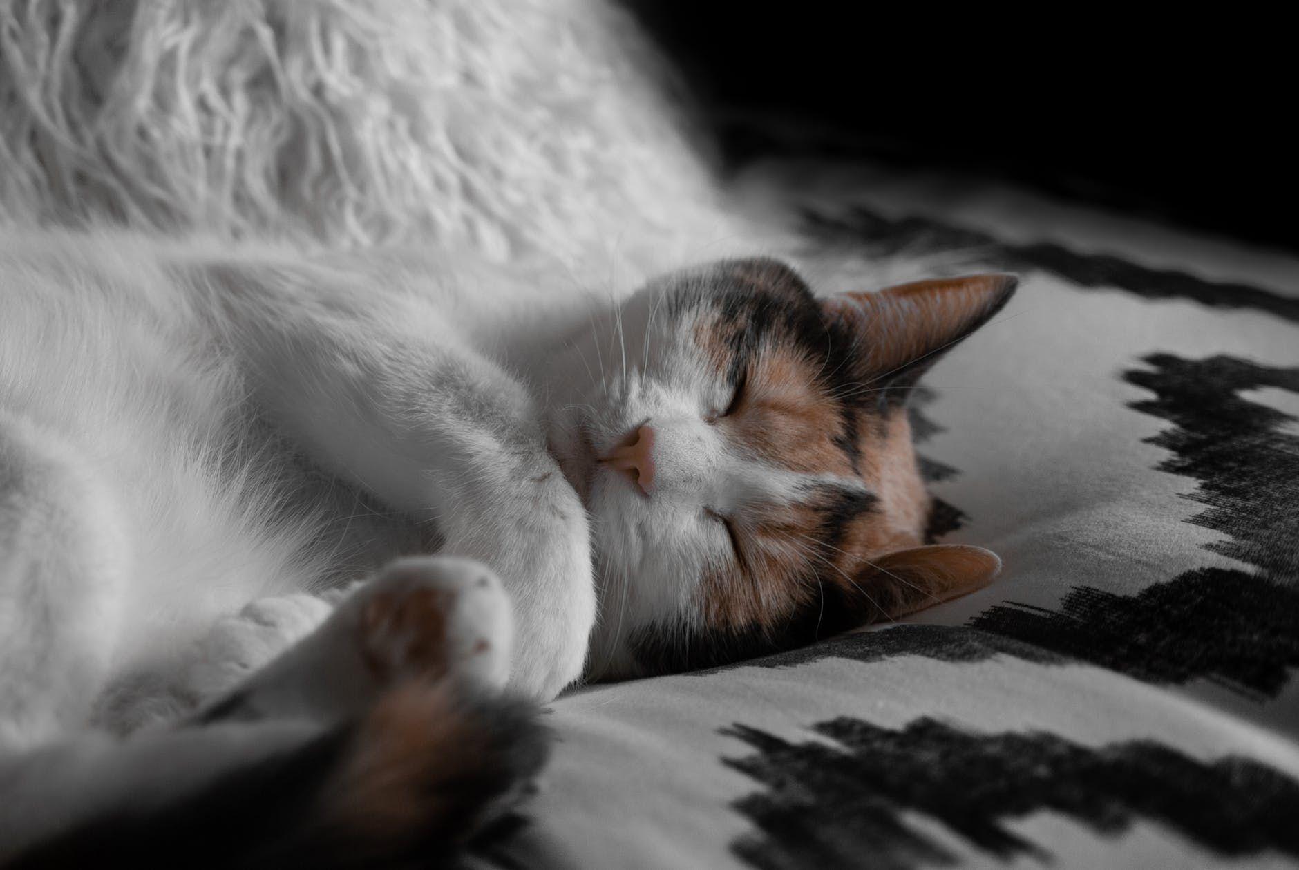 I Like this bed alot Soo soft & Fluffyhttps//i.redd.it