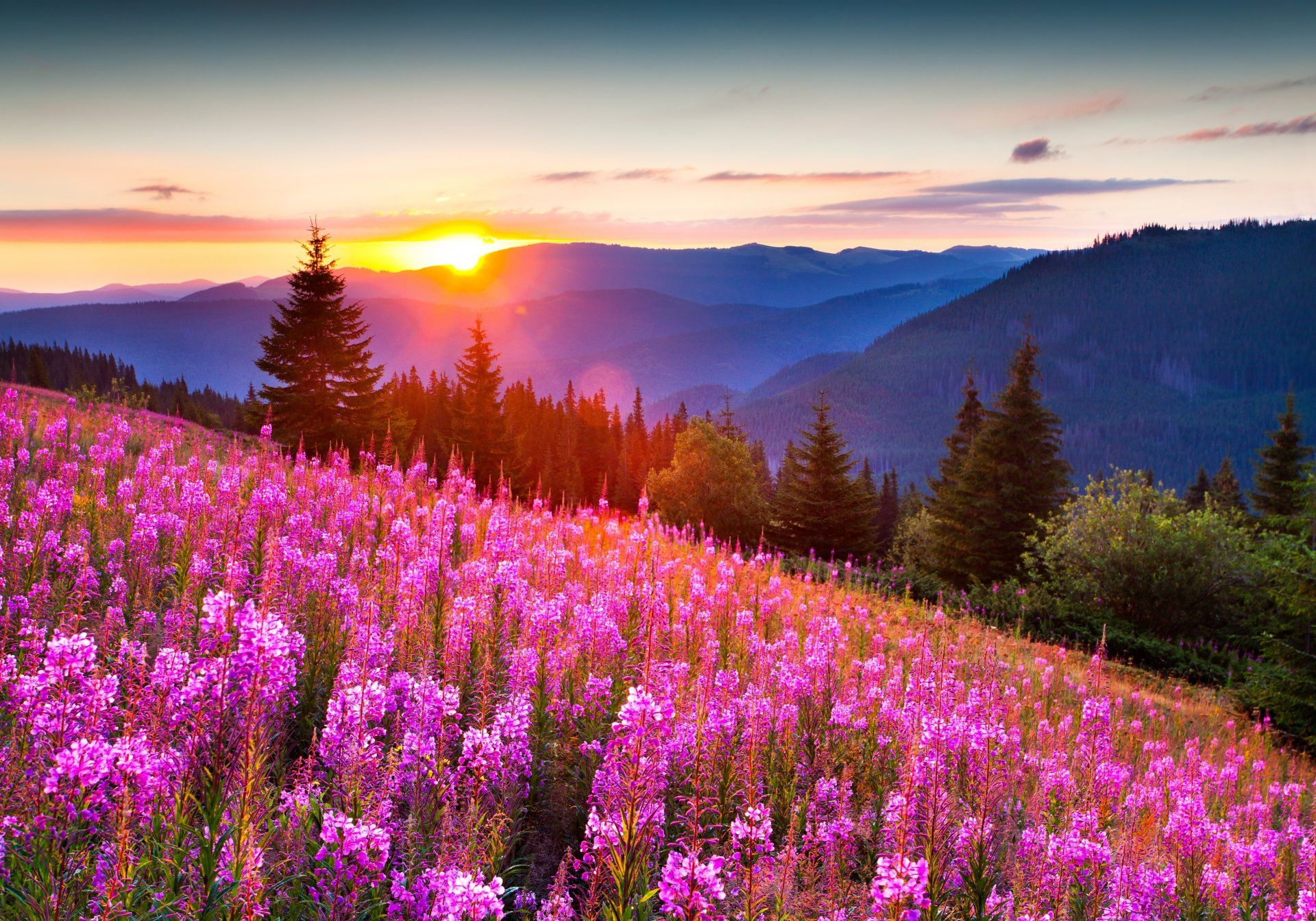 Priroda Gory Leto Svet Solnca Les Cvety Foto Pozitiv Krasivo Hd