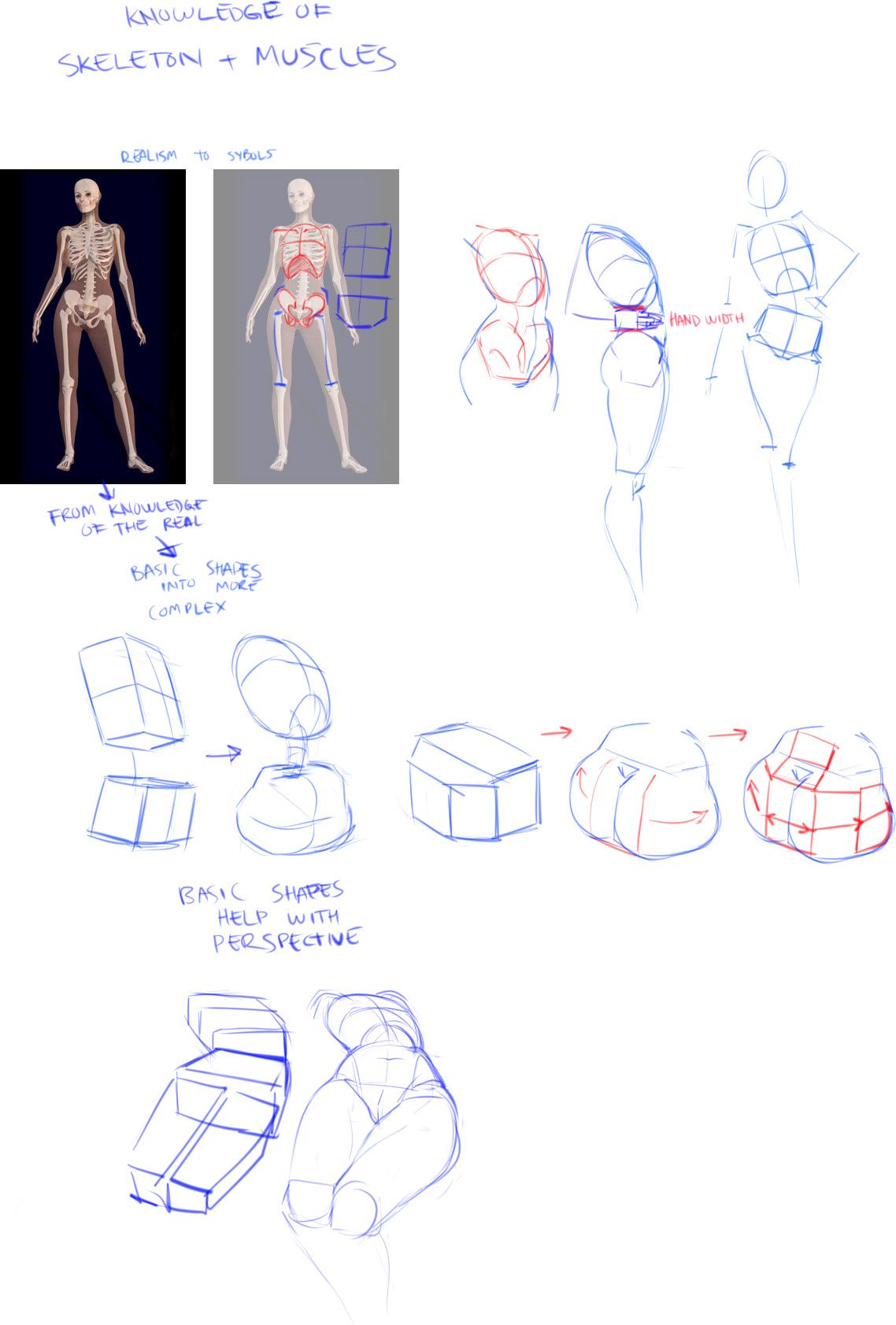 female anatomy for artists course free download