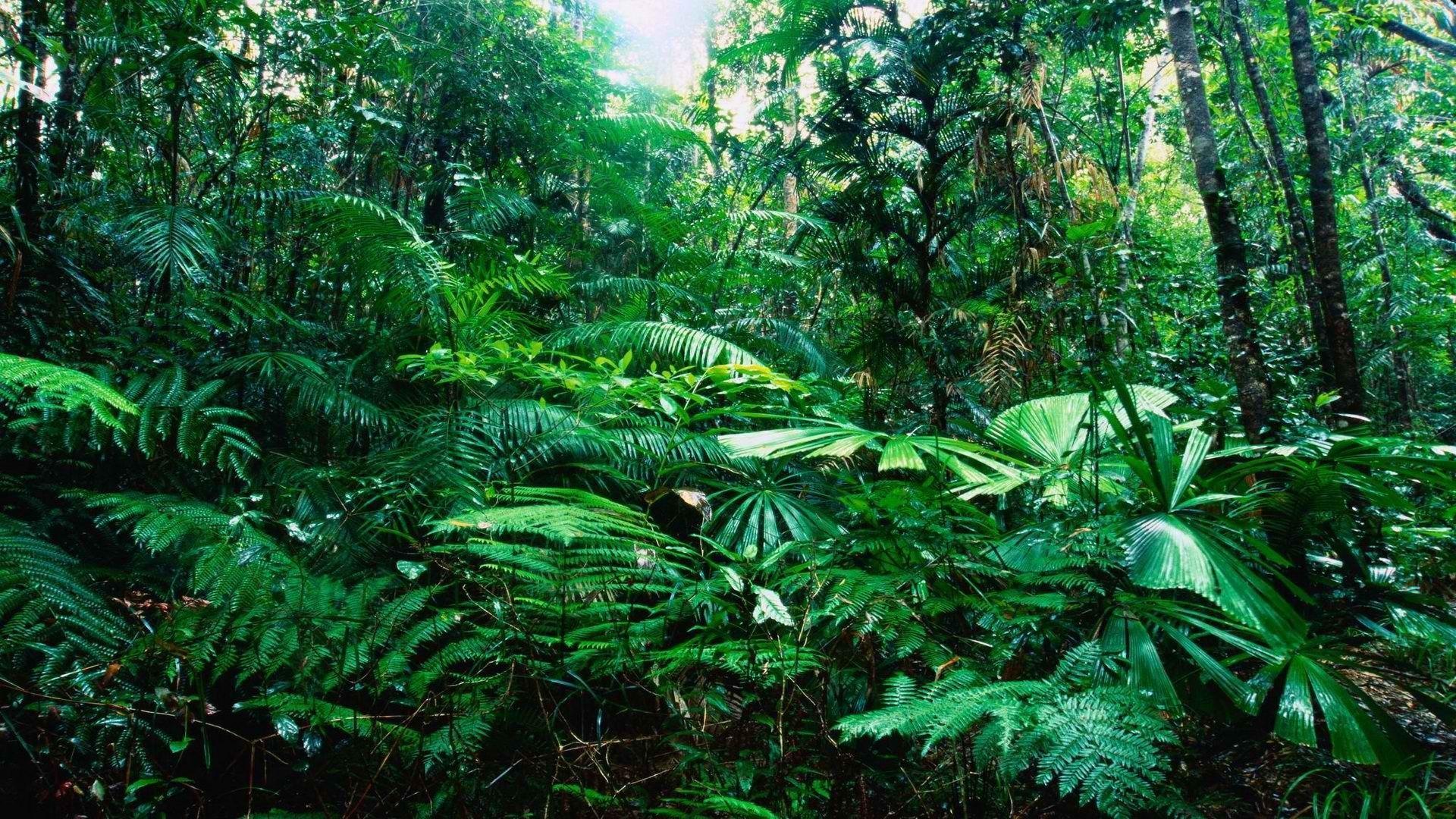 Tropical Rainforest Wallpaper 990284 Rainforest Pictures Tropical Rainforest Jungle Wallpaper