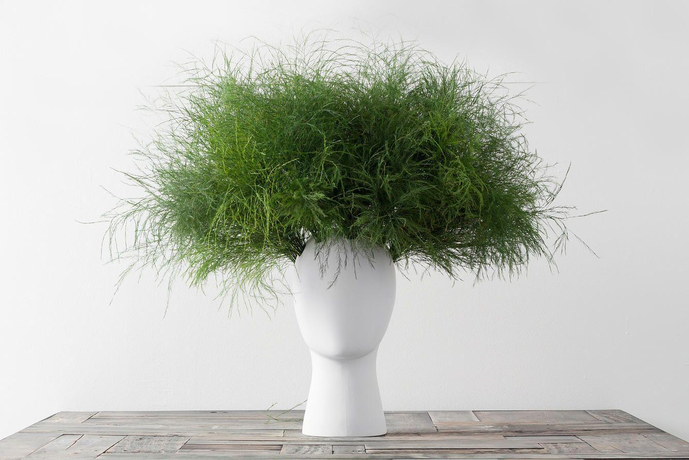 The Wig Vase . Tania da Cruz
