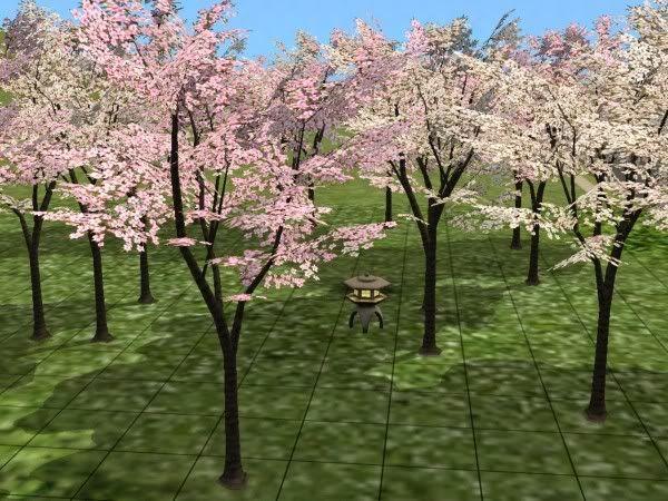 Sakura Blossom Cherry Blossom Tree Reupload More Detailed Version Blossom Trees Cherry Blossom Tree Japanese Maple Tree