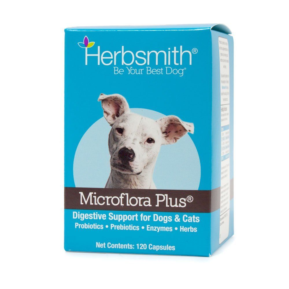 Best probiotics for dogs and catsdrcandys holistic