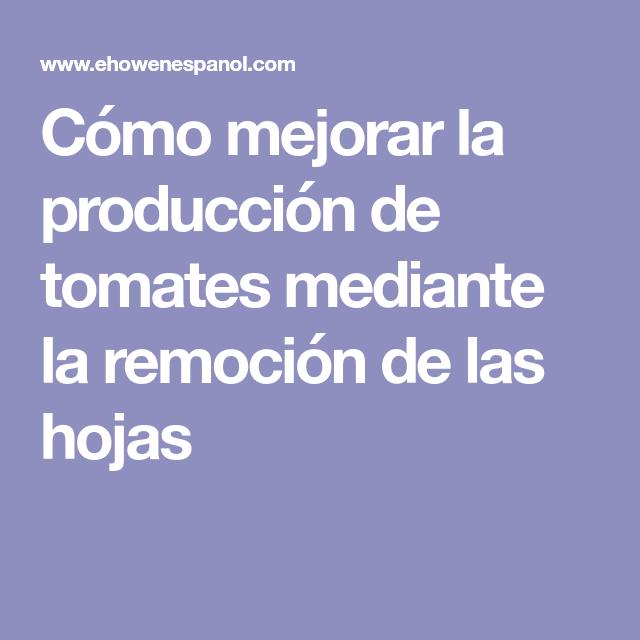Cómo Mejorar La Producción De Tomates Mediante La Remoción De Las Hojas Huerta Plantas De Tomate Tomate