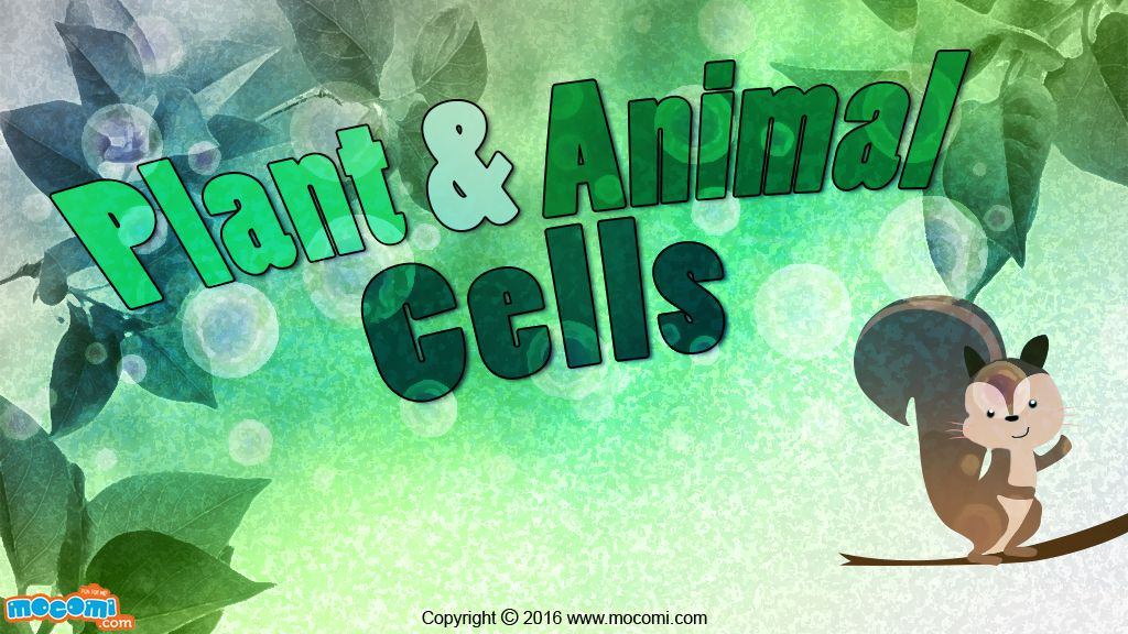 Plant Cell and Animal cell Difference Biology for Kids