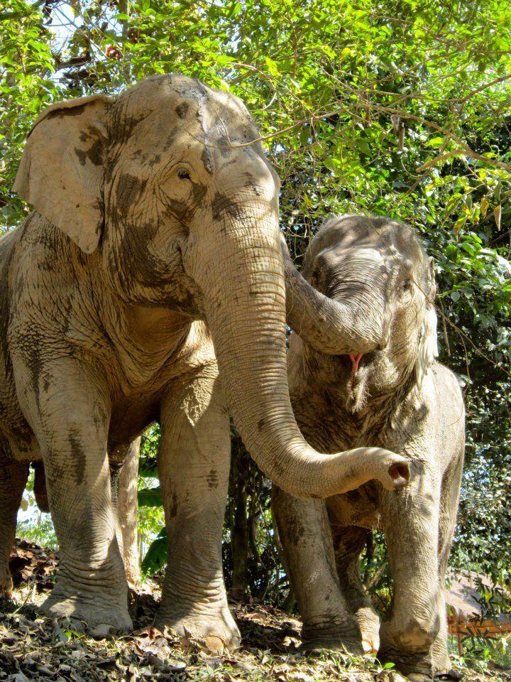 At Boon Lott\'s Elephant Santuary (BLES). https://www.facebook.com ...