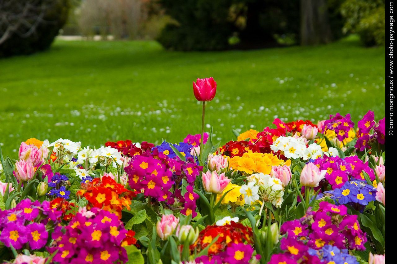 Fond cran du printemps en arri re plan de bureau t for Fond ecran ete hd