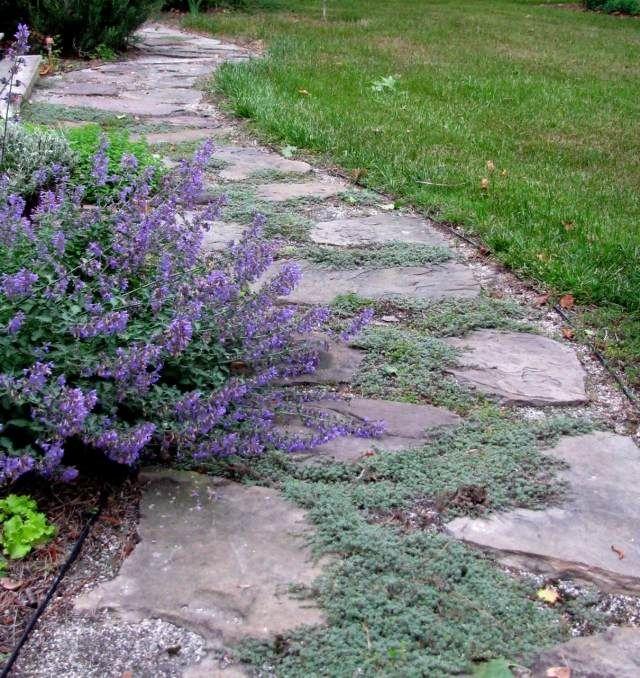 gehweg anlegen idee naturnah bodendecker trittsteine Garten - gartenwege aus holz anlegen