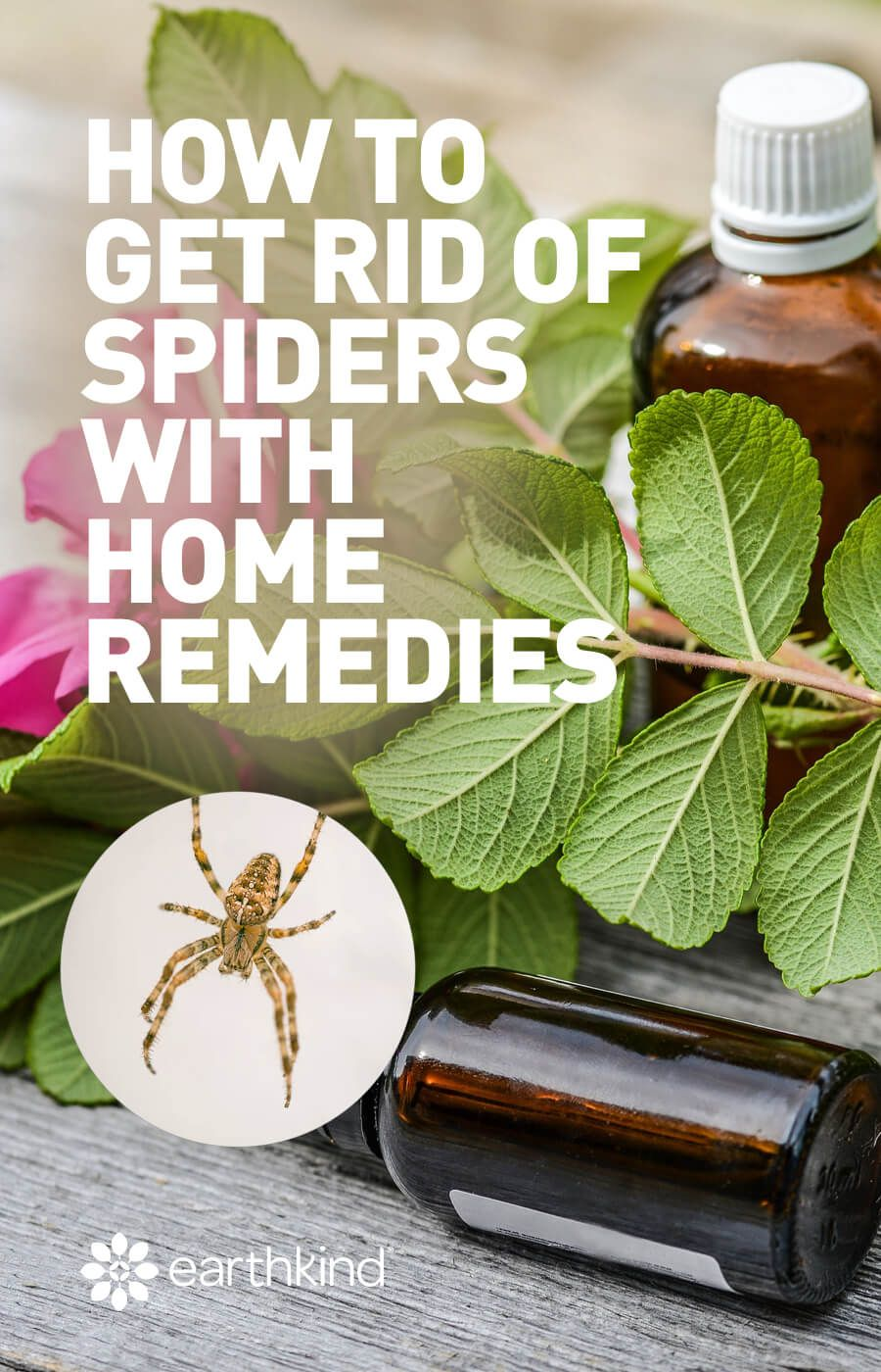 How To Get Rid Of Spiders With Home Remedies Earthkind Get Rid Of Spiders Home Remedies For Spiders Home Remedies