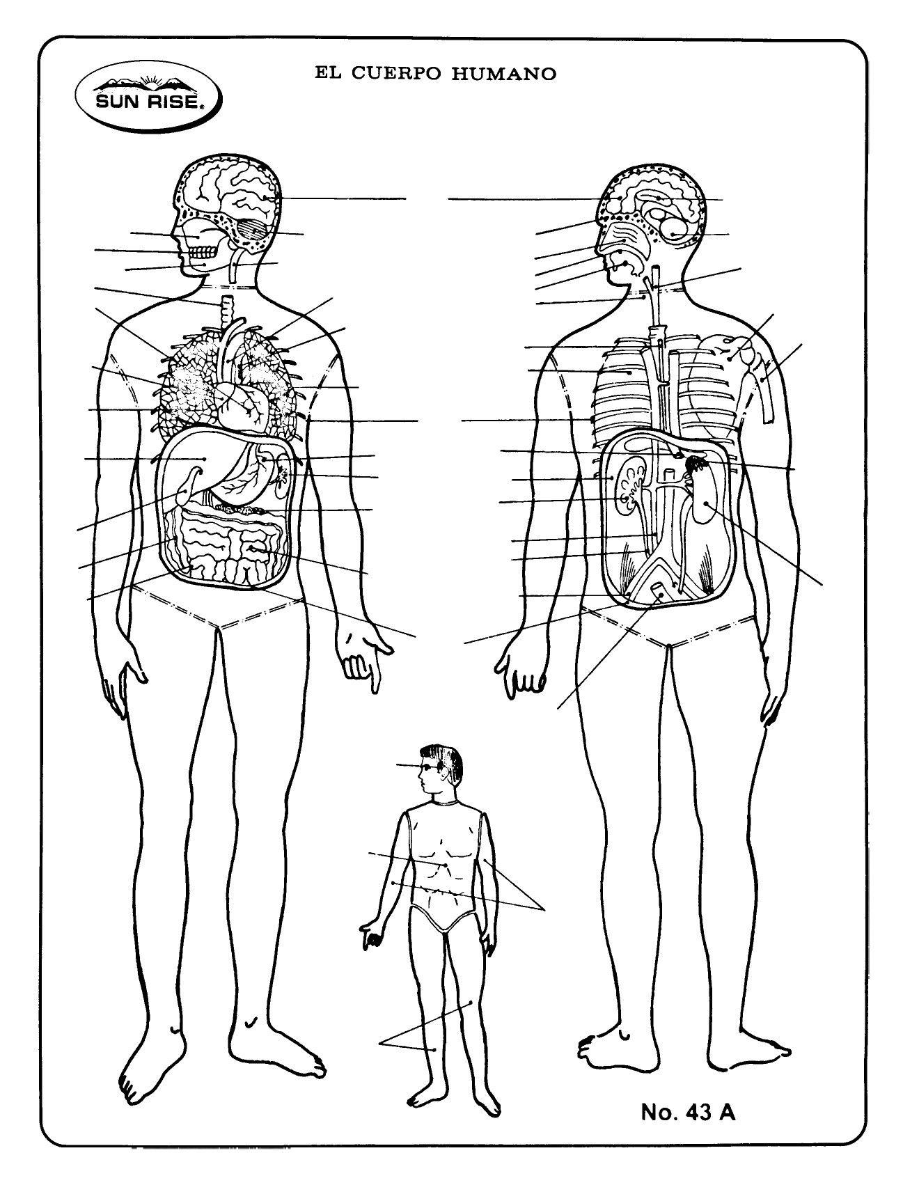 Esquema Cuerpo Humano Sin Nombres Cuerpo Humano Cuerpo Humano Dibujo Cuerpo