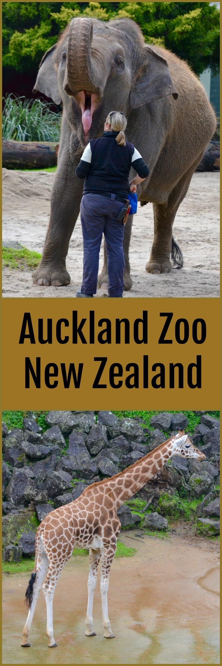 Auckland Zoo New Zealand's Largest Zoo Auckland, New