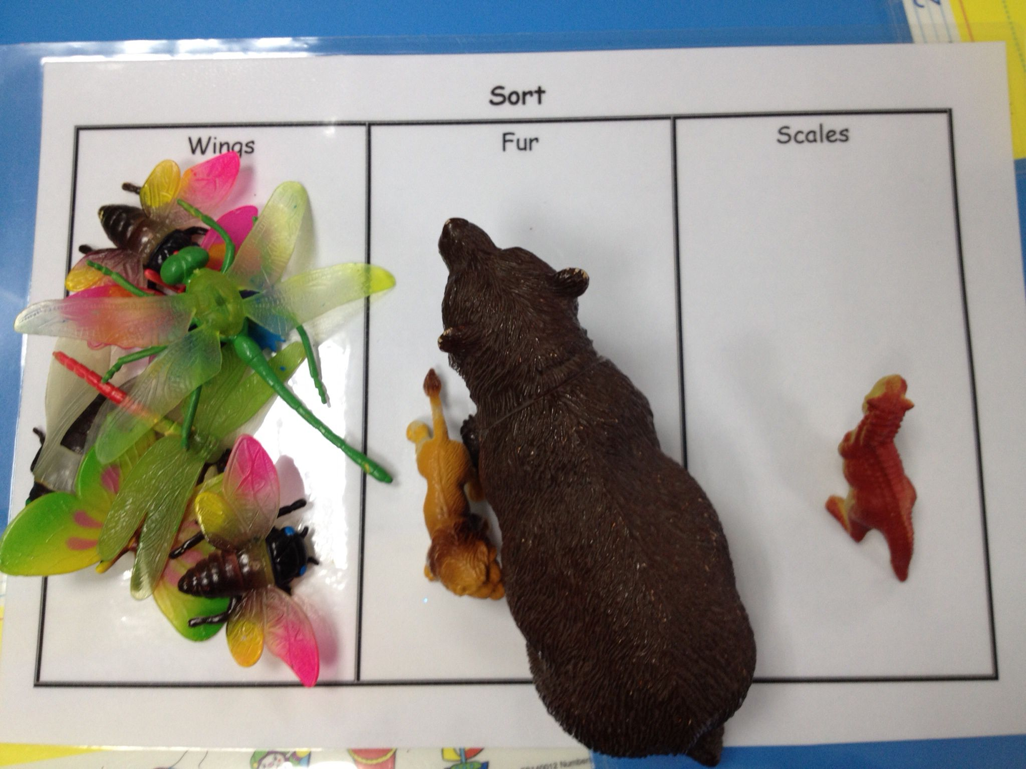 Sorting Animals By Body Covering